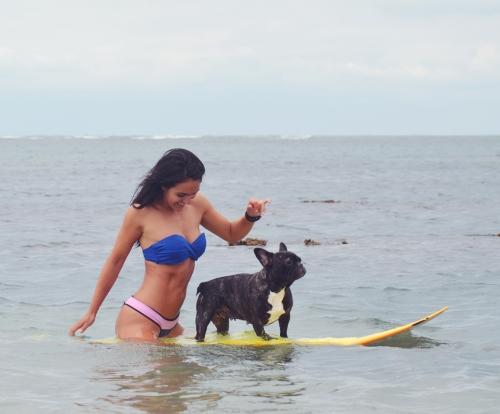 canisurf chien surf