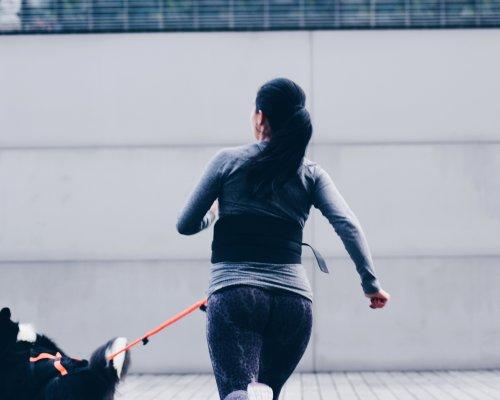 courir en hiver chien