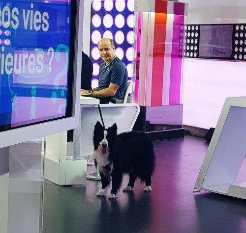 runwithurdog whiskey télé France 2 c'est au programme