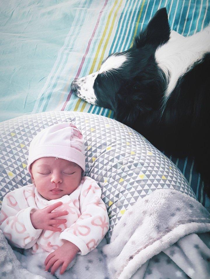 Comment préparer le chien à l'arrivée d'un bébé dans lafamille