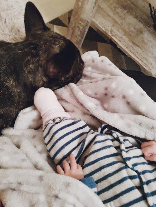 Loulou et Mia runwithurdog