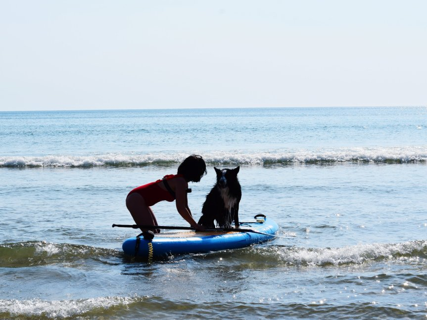 runwithurdog paddle stand up sup border collie