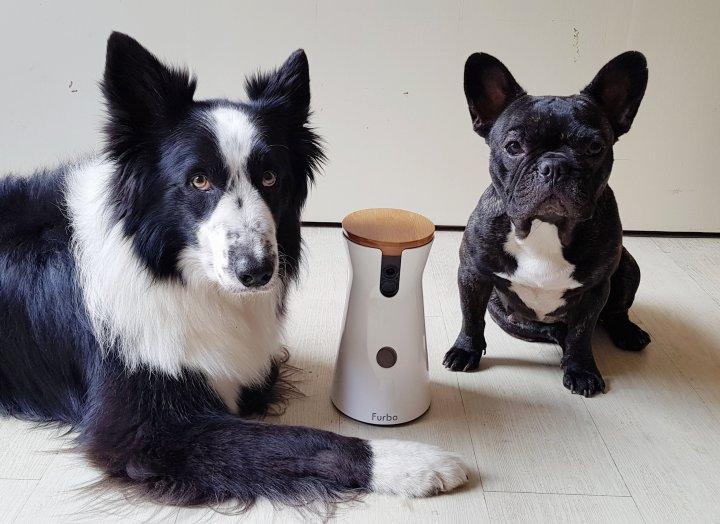 Comment surveiller son chien laissé seul à la maison?