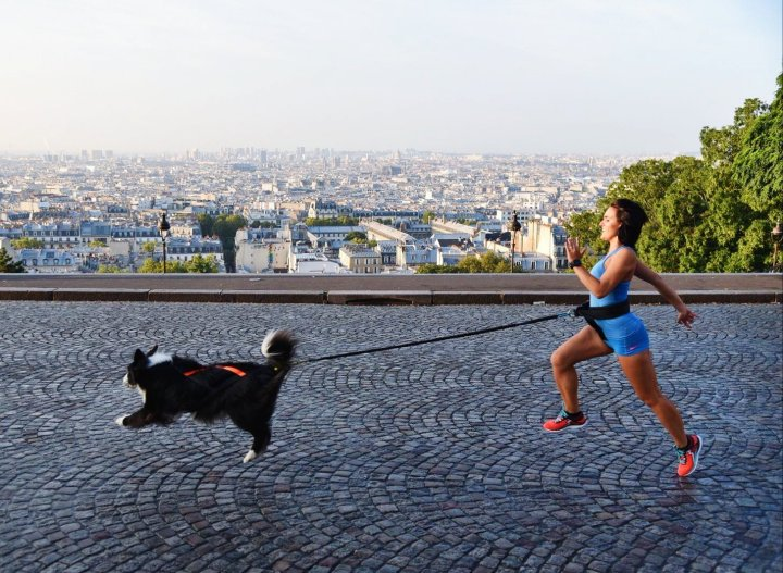 runwithurdog photo chien border