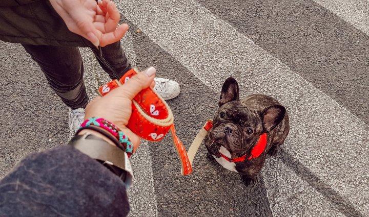 Comment faire confiance à un dogsitter