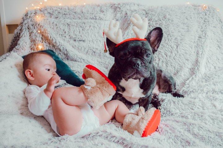 runwithurdog bébé bouledogue français noel