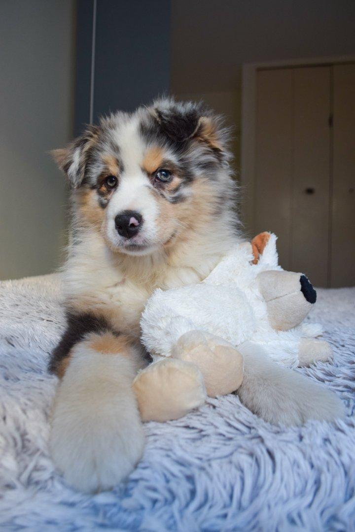 runwithurdog berger australien Jazz