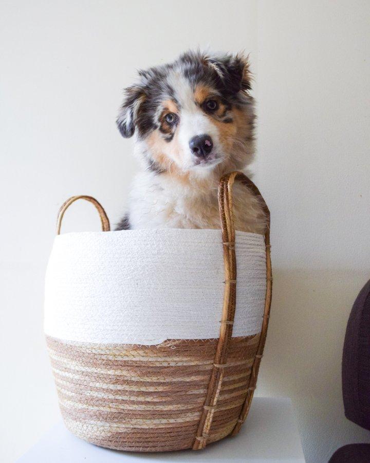 panier jouets chien
