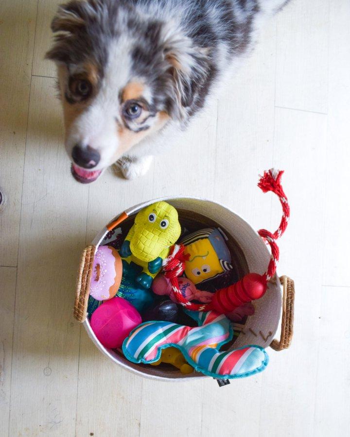 panier jouets chien runwithurdog
