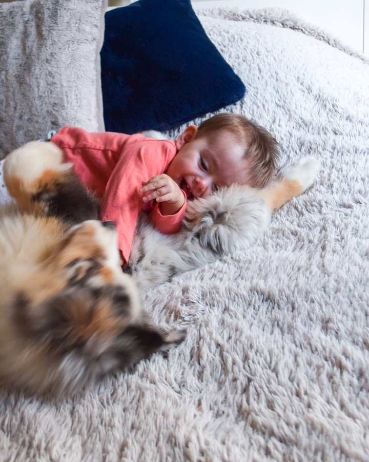 Comment s'organiser au mieux lorsqu'on a un bébé et des chiens?