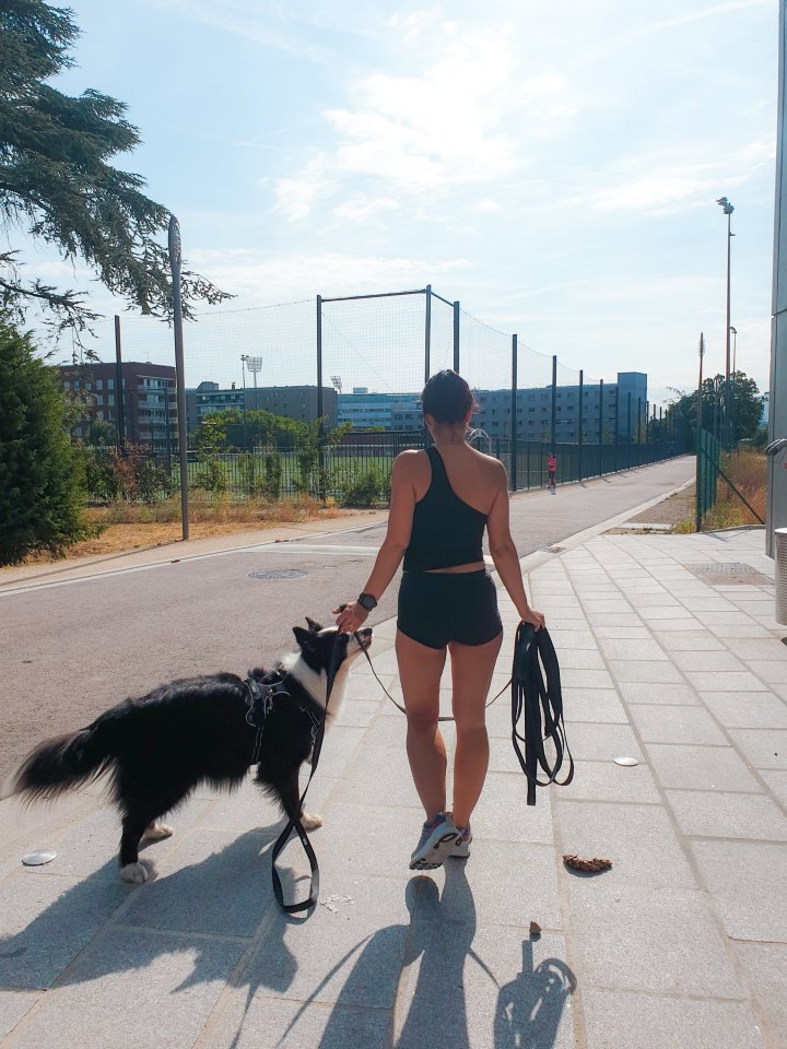 runwithurdog idog tom & co antony lemoigne