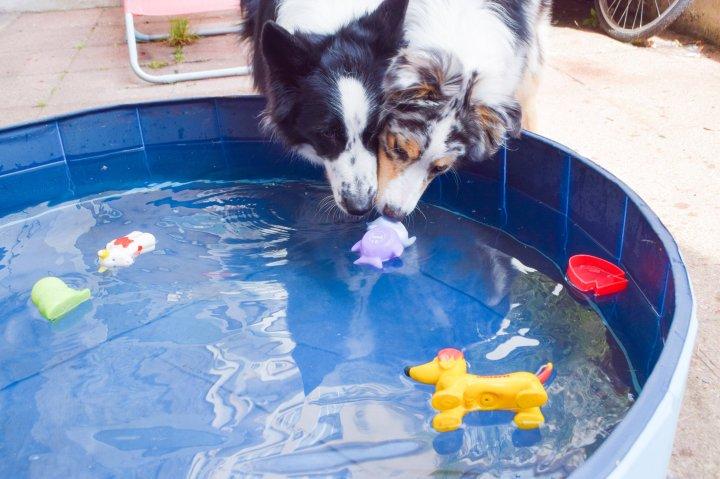 Quatre jeux amusants à proposer à votre chien pendant lesvacances