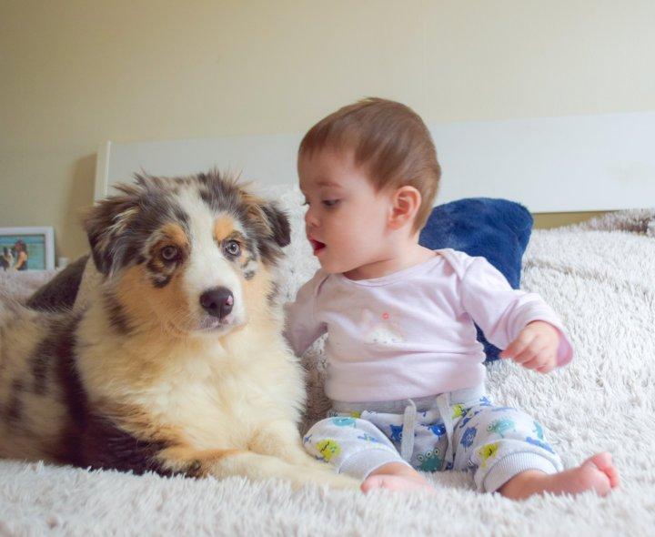 Prendre un chiot lorsqu'on a un bébé en basâge
