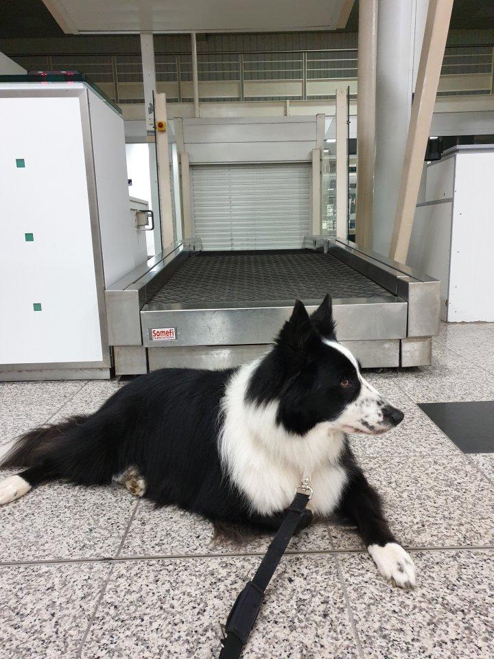 runwithurdog prendre l'avion avec son chien